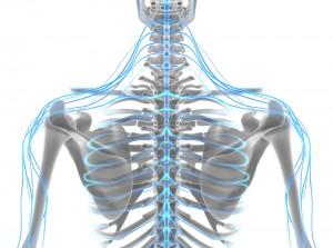中枢神経と末端神経