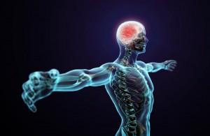 自律神経がバランスを整える